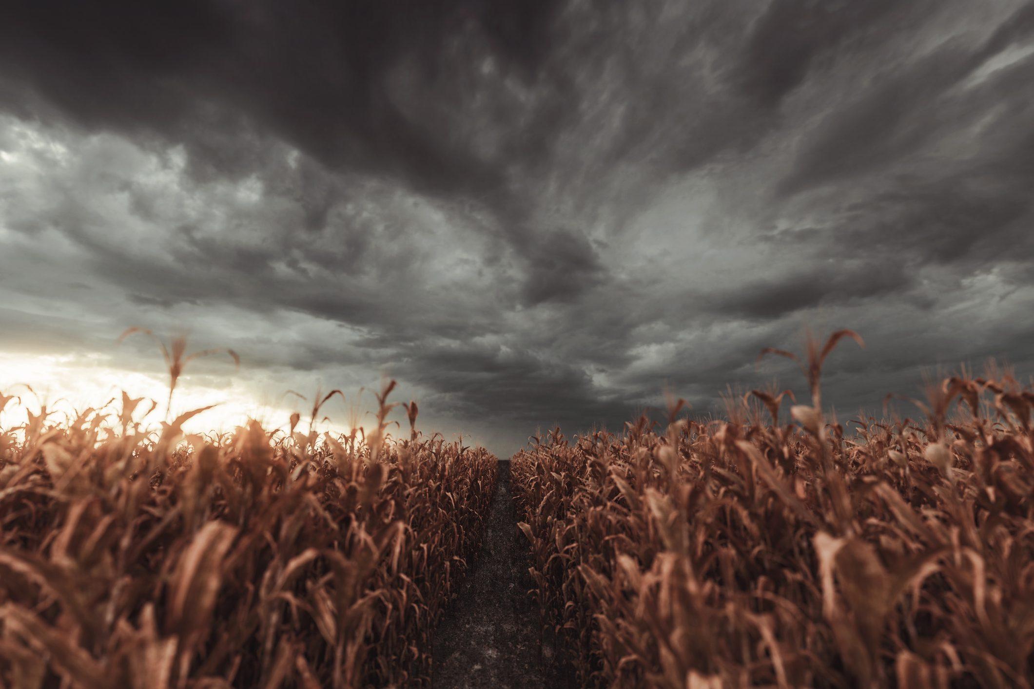 Cambiamenti climatici, oltre 11.000 disastri e 3.600 mld di dollari di danni negli ultimi 50 anni