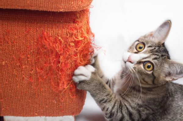 I danni del gatto li paga l'inquilino